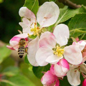 Prodej medu - Včelařství Ratajovi