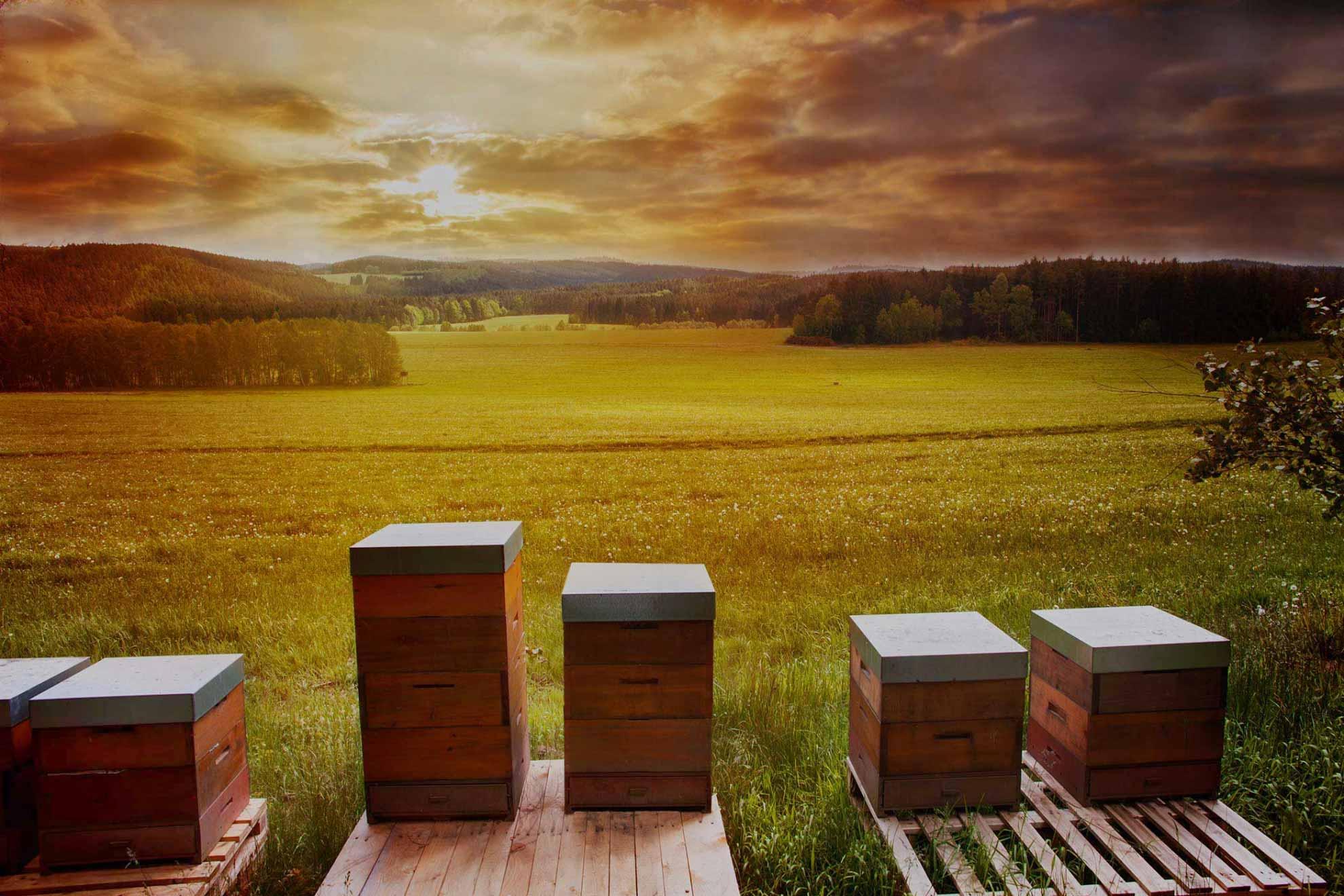 Prodej medu, svíčky ze včelího vosku, prodej oddělků